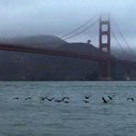 People choose the Golden Gate bridge for suicide