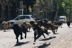 Mutts overrun Budapest